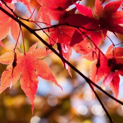 Momijigari, gli splendori del Giappone in autunno Destinazioni