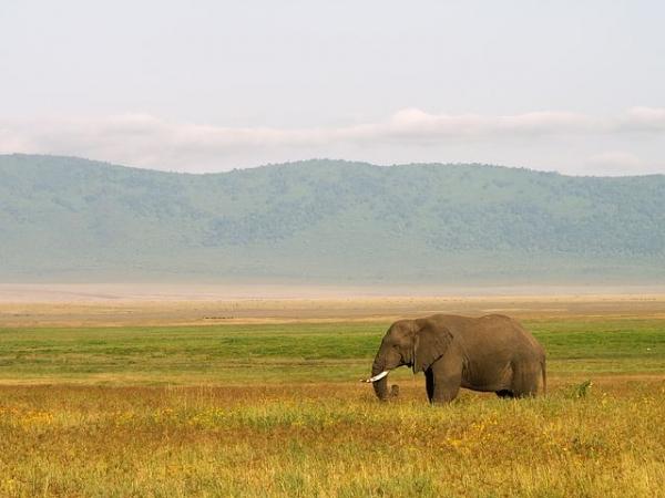 Safari Fotografico: i 10 Consigli del Professionista Africa