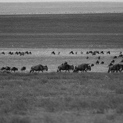 Tanzania Grande Migrazione Ecoturismo