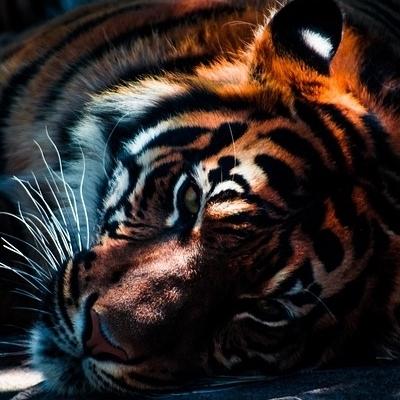 India - Alla ricerca della Tigre Tour Culturali
