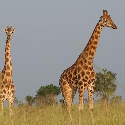 I Panorami dell'Uganda Safari Safari