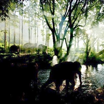 Il regno degli animali Safari