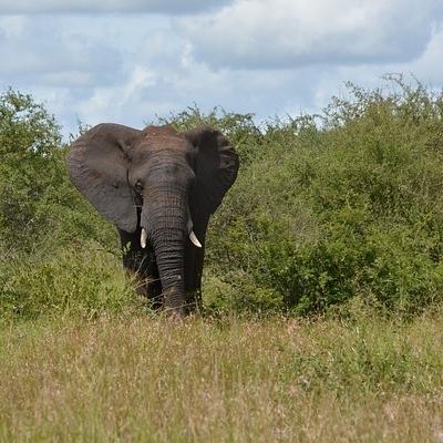 Fly & Drive-Parchi e Swaziland