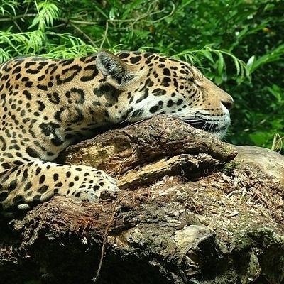 Sulle tracce del giaguaro Tour Individuali e di Gruppo