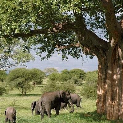 Spirito della Tanzania in gruppo