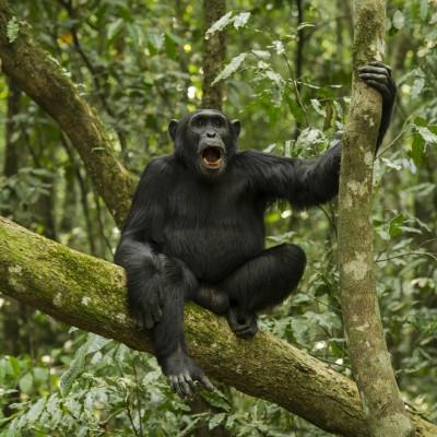 Big five e primati Safari