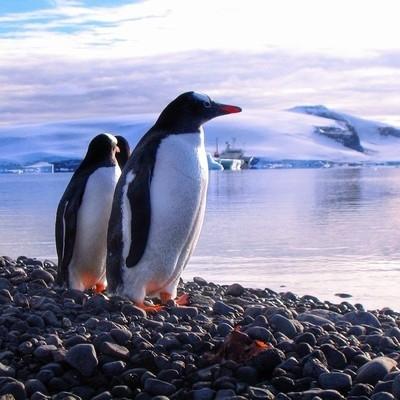Falklands, South Georgia, e Antarctica