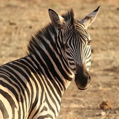 Safari Njema Safari