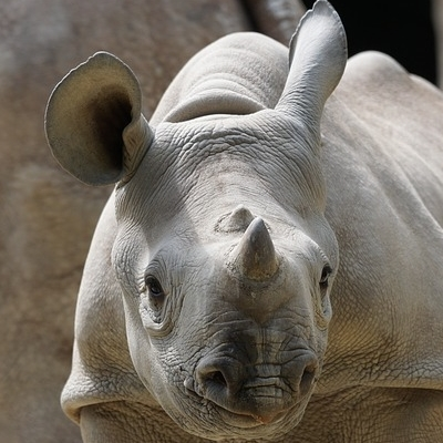 Safari Rafiki