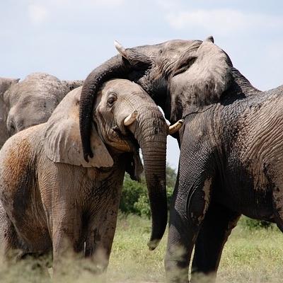 Safari Big Five Safari