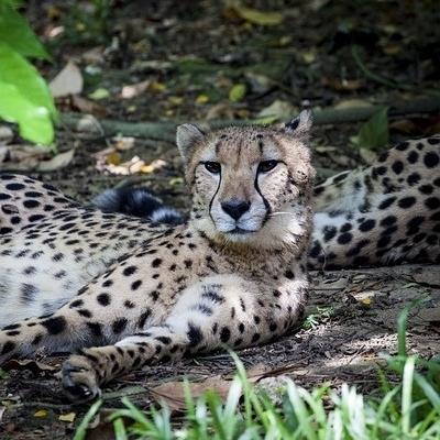 Safari Tsavo Est + Ovest