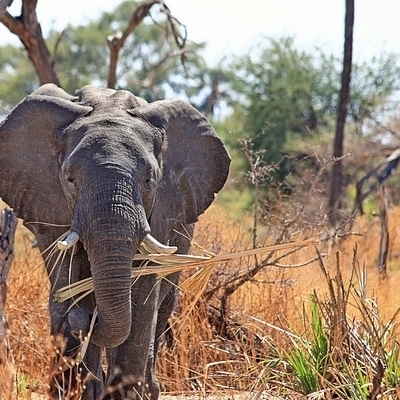 Safari out of Africa Safari