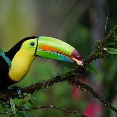 Costa Rica: Sport, Natura e Relax