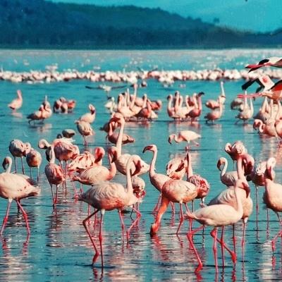 Verso il lago Turkana