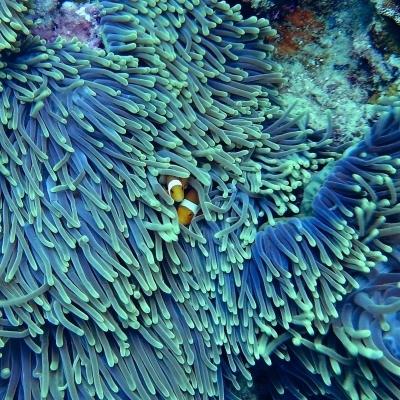 Dai più bei parchi dell'altopiano alla barriera corallina
