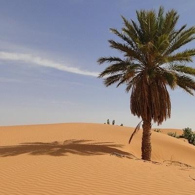 Dal Sahara all'Oceano Deserto