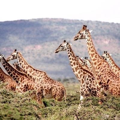 Safari, paesaggi e popoli primitivi