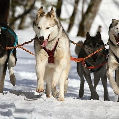 Avventura nella terra dei Sami Tour Individuali e di Gruppo
