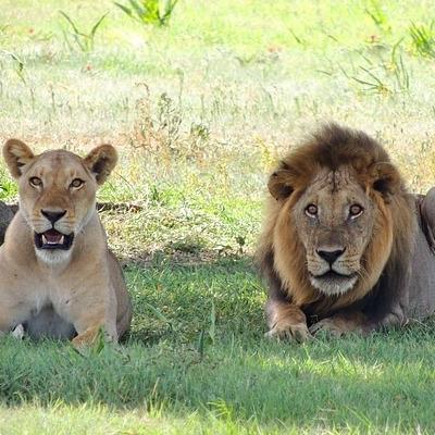 Safari di Lusso Safari