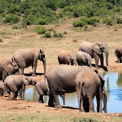 Safari nel Selous Game Reserve Mare a FanJove Safari