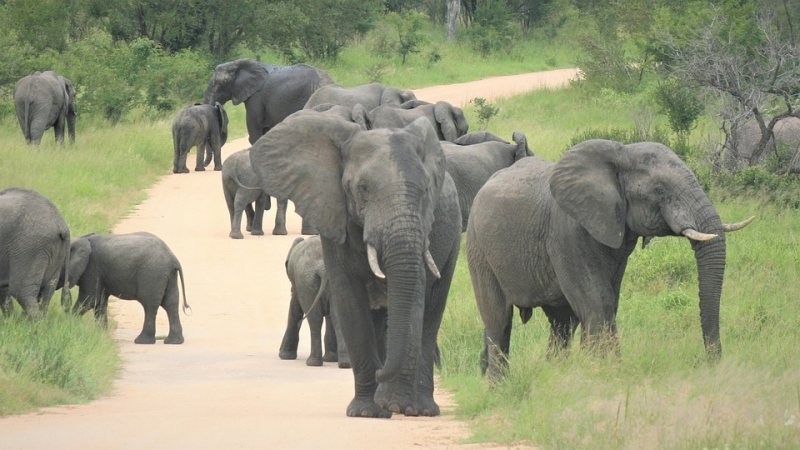 Watoto Safari Safari