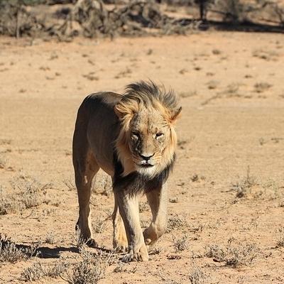 Safari Esclusivo Safari