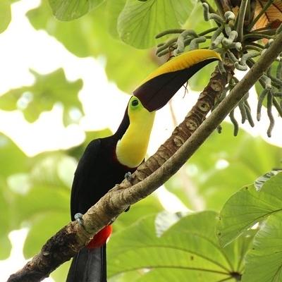 Costa Rica: Immersione nella Natura