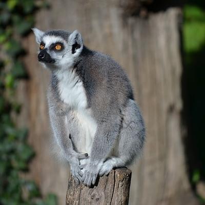 La terra dei Lemuri