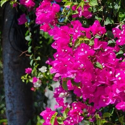Madeira: I più bei giardini dell'Eterna primavera
