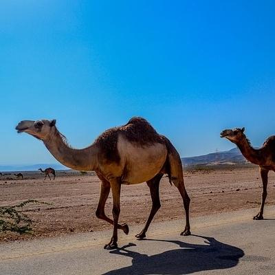 Oman: Il Grande Sud Tour Individuali e di Gruppo