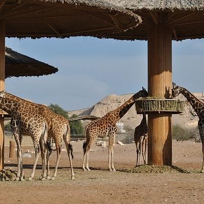 Safari, nature e cultura, in gruppo Safari