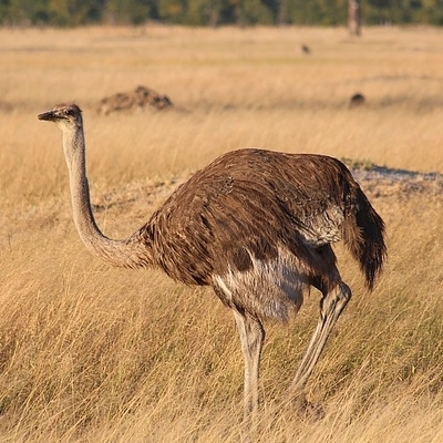 Tra i paesaggi selvaggi dell'ex-Rhodesia