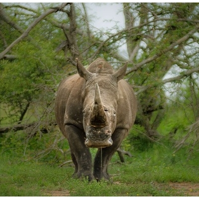 La Grande Migrazione invernale Safari