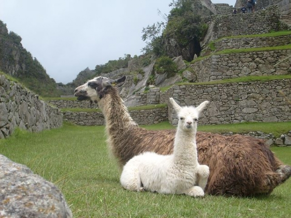 EXPLORE MACHU PICCHU & THE AMAZON RIVER