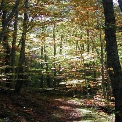 Parco Nazionale Foreste Casentinesi Trekking