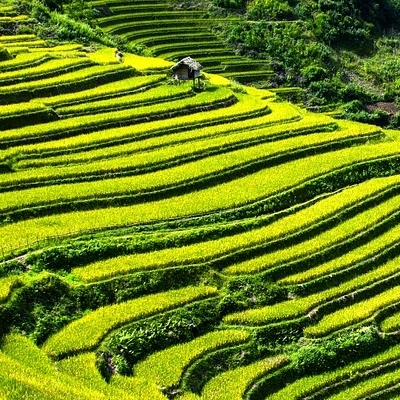 L'Incredibile Mu Cang Chai Tour Individuali e di Gruppo