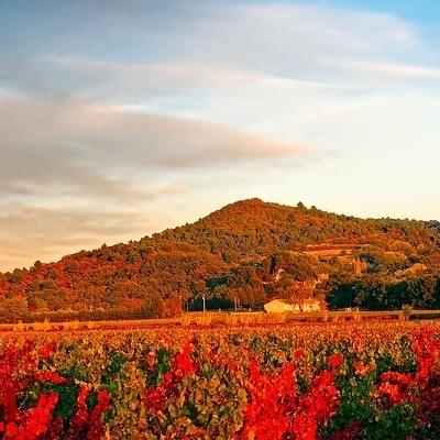 La rotta dei vini dal Beaujolais allo Chablis