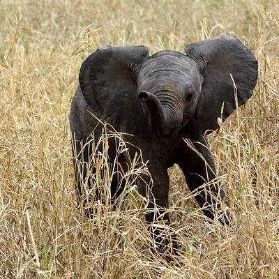 Duma Safari Safari