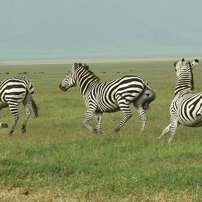 Pumba Safari