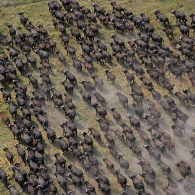 Twiga Safari