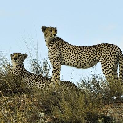 Faru Safari