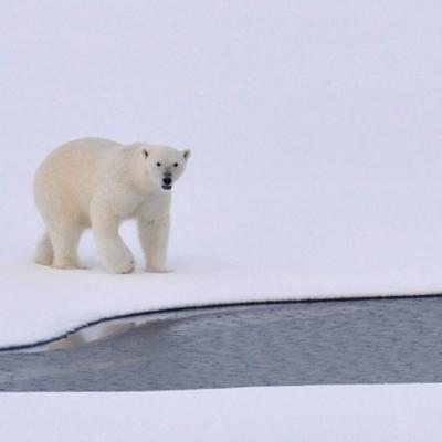 Svalbard coste Ovest e Nord Crociere