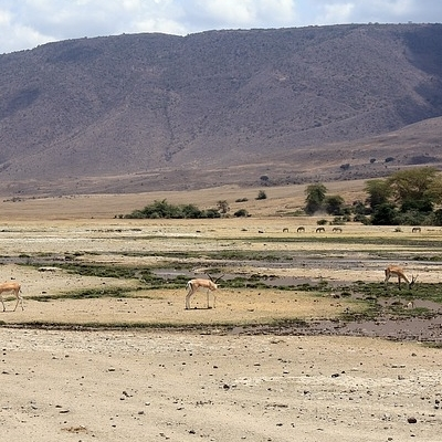 Nyani Safari
