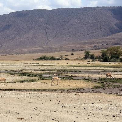 Nyani Safari Safari