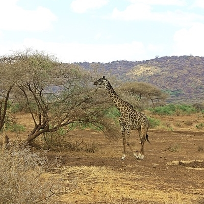 Golf & Safari - Tarangire e Ngorongoro -
