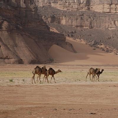 Deserto sconosciuto: l'erg Tihodaine Deserto