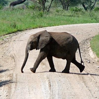 Da Ngorongoro a Serengeti