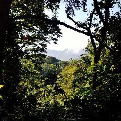 I parchi e i gorilla di montagna