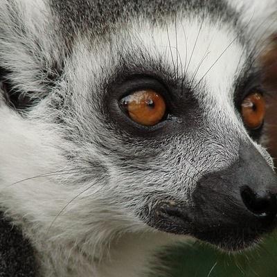 Madagascar Tour Culturali