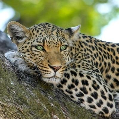 Incontaminati paesaggi australi Safari